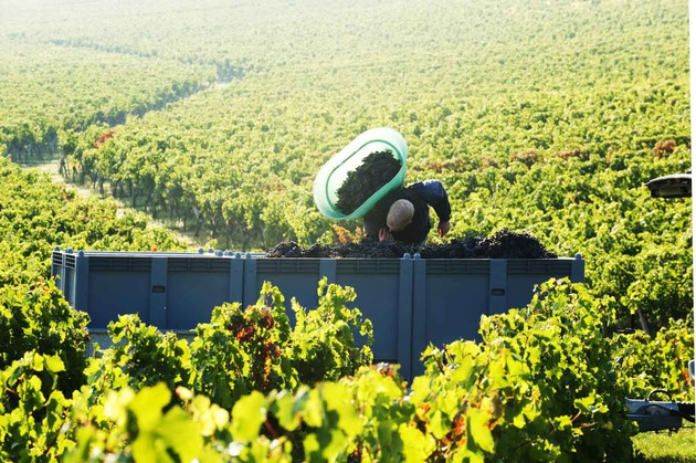 Sunny Bordeaux weather has greatly improved harvest prospects