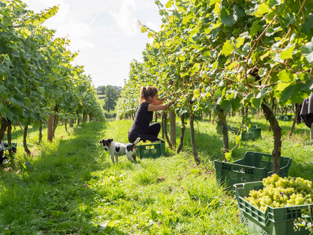 Sales of English and Welsh wine double in 2018