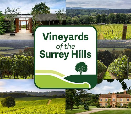 Surrey Hills vineyards join forces to form 'English wine region'